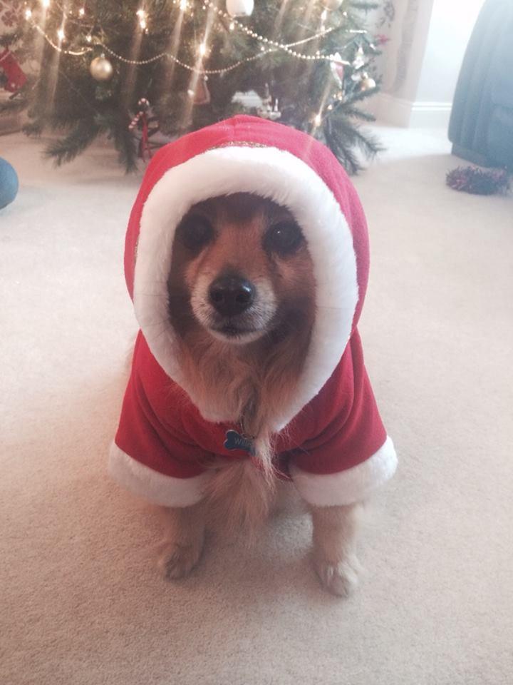 dog-christmas-outfit