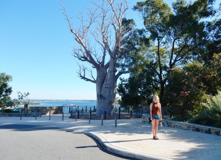 boab-tree-perth-history