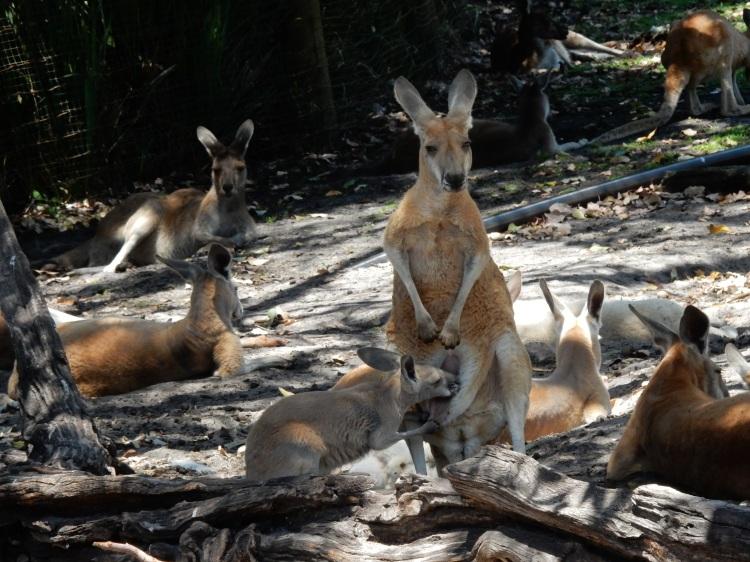 travel-blogger-kangaroo-perth
